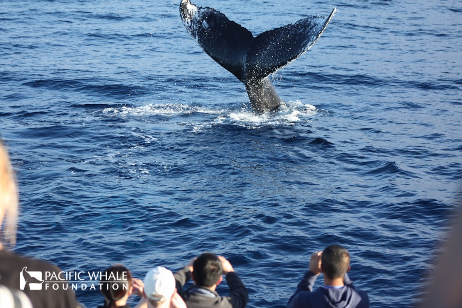 PWF Whale Watch
