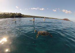 Hawaiian Paddle Sports