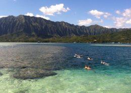Holokai Kayak Snorkel Adventures snorkeling horseshoe reef