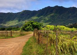 Kipu Ranch Adventures IMG