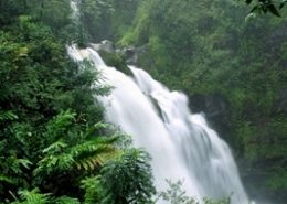 Temptation Tours rain forest waterfall