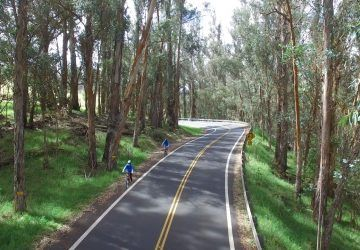 haleakala bike company eucalyptus riding
