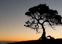 hawaii legacy tours tree