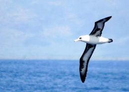 holo holo charters niihau sea birds