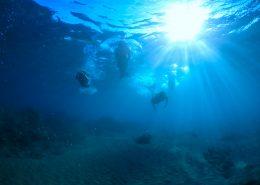 hawaii mermaid adventures  mermaid silloutte e