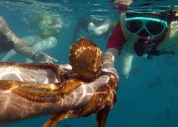 ko olina ocean adventures fish