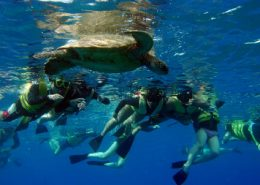 ko olina ocean adventures people turtle