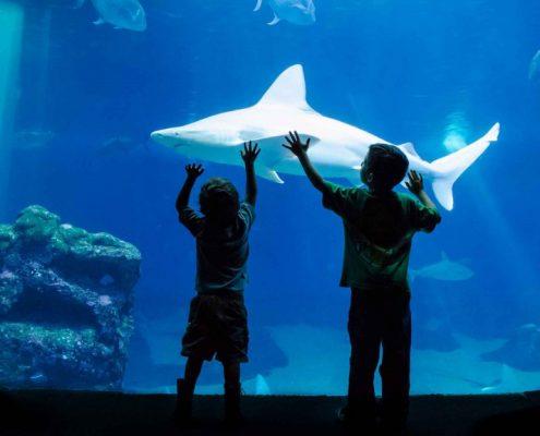 maui ocean center Kids petting shark