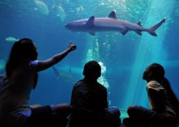 maui ocean center home exhibits attractions