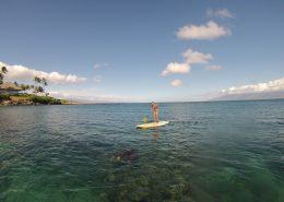 maui stand up paddle KapaluaSUPTurtle