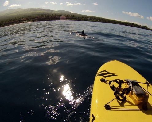 maui stand up paddle Makena SUP Dolphin