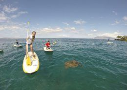 maui stand up paddle Makena girl sup turtle