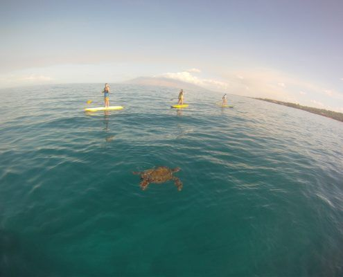 maui stand up paddle MakenaSupTurtle