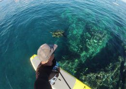 maui stand up paddle MakenaSUPTurtleAbove
