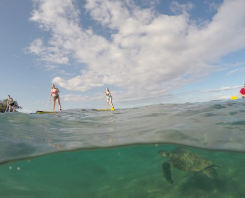 maui stand up paddle MakenaSupturtleoverunder