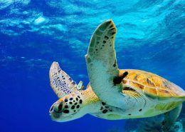 Sea Paradise Turtle