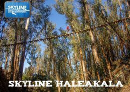 Skyline Eco Adventures HALE