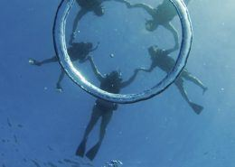 Dolphin Excursions bubble ring