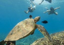 Dolphin Excursions turtle black fish