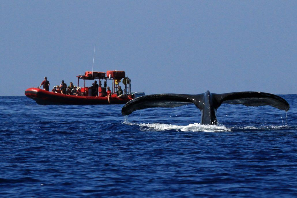 redline rafting whale watching