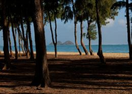 oahu photography tours beach trees