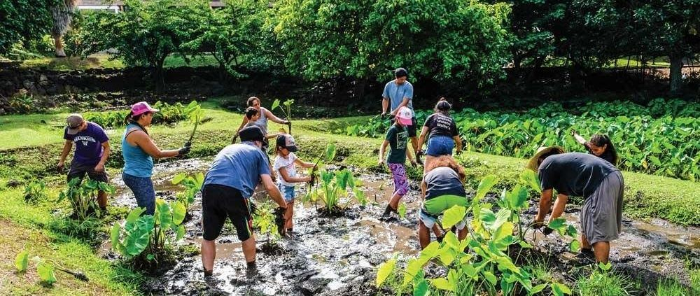 Ka Papa Lo'i o Kānewai Volunteer Workday