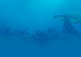 Homepage-Turtle-Bg